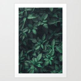 saelvaticx Art Print