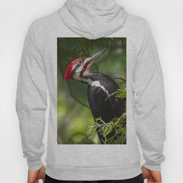 Pileated Woodpecker 6340 Hoody