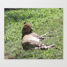 Sleeping Cheetah Canvas Print