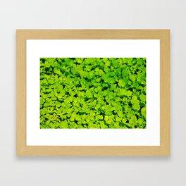 Green Clover Framed Art Print