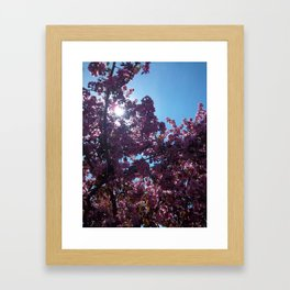 Sweet Creations Framed Art Print