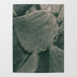 Still Life, macro photography, fine art, nature love, prickly pear, home decor Poster