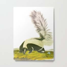 Large-tailed Skunk Hand Drawn Illustration by John James Audubon Metal Print