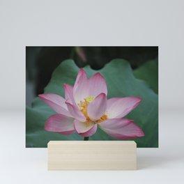 Hangzhou Lotus Mini Art Print