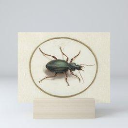 Golden Ground Beetle, 17th Century Illustration Mini Art Print