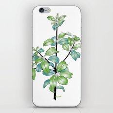 Black Matipo iPhone & iPod Skin
