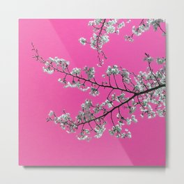 Spring, Cherry Blossom Time Metal Print