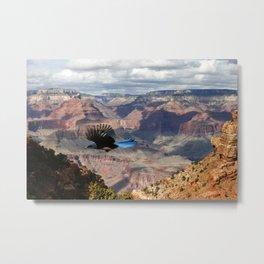 Scrub Jay over the Canyon Metal Print