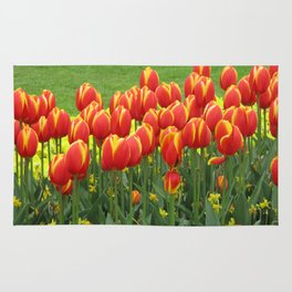 Tulips in Amsterdam Rug