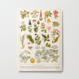 Adolphe Millot - Plantes vénéneuses - French vintage botanical illustration Metal Print