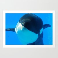 killer whale Art Prints featuring Killer Whale by Amber Jade-Rain