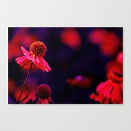 last Summerflowers in the dark Canvas Print