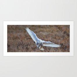 White Landing Art Print