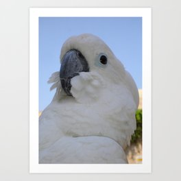 Ruffled Feathers Of A Blue Eyed Cockatoo Art Print