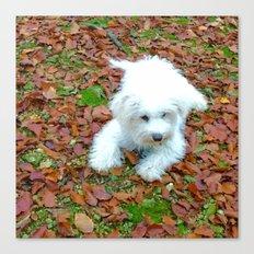 Teddy In Autumn Canvas Print