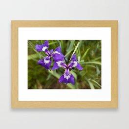 Wild Iris Photography Print Framed Art Print