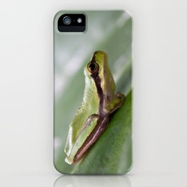 Mediterranean Tree Frog 1095 iPhone Case