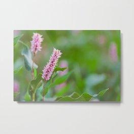 Beautiful Flowers from Pond  Metal Print
