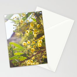 Golden Wattle Catches The Light Stationery Cards