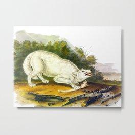 White American Wolf Metal Print