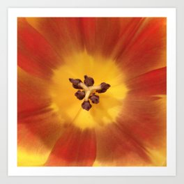Sunny flower center Art Print