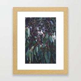 Gum Nuts Framed Art Print