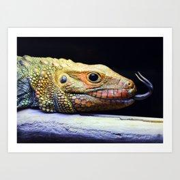 Caiman Lizard Profile Art Print