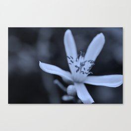 Lime Blossom Canvas Print
