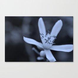 Lime Blossom Canvas Print
