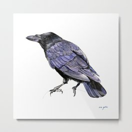 Crow Watercolor and Ink Illustration Metal Print