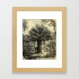 The Coqaito Nut or Wine Palm Framed Art Print