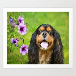 Cavalier King charles With Pruple Pansies  Art Print