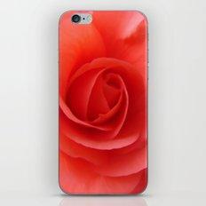 Rose Delicate iPhone & iPod Skin