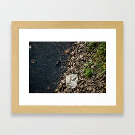 The Frog and the Trash Framed Art Print