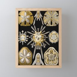 Ernst Haeckel Echinidea Sea Urchin Framed Mini Art Print