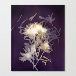 Lumen S1 VE1 Canvas Print