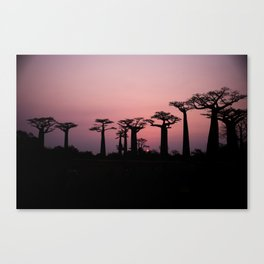 Avenue of the Baobabs, Madagascar #society6 #buyart #decor Canvas Print
