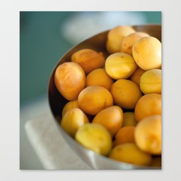 Fresh Apricots in Summer Canvas Print