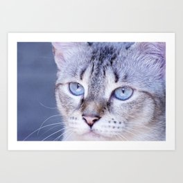 kitten blue yes Art Print
