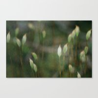 moss Canvas Prints featuring Moss  by Jess Val