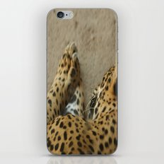 Sleeping leopard iPhone & iPod Skin