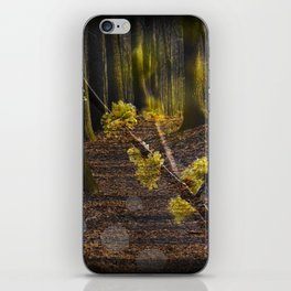 Walking through the forest in early spring iPhone Skin