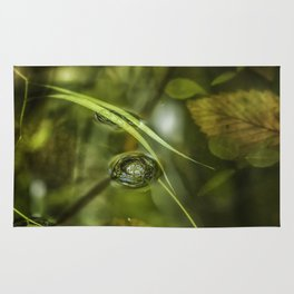 A Bubble on the Surface of a Pond Rug