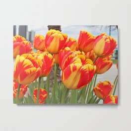 Orange Mix Tulips Metal Print