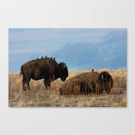 Bird on Buffalo Canvas Print