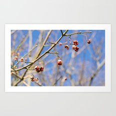 Willow Bush Blossoms Art Print