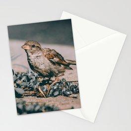 Summer Sparrow. Bird Photograph Stationery Cards