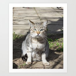 Cat pictures, cat eyes, pictures of the most beautiful cat eyes, cute cat, innocent cat pictures, cl Art Print