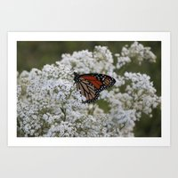 Wedding Butterfly Art Print