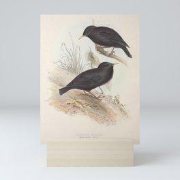 Sardinian Starling stunrus unicolor11 Mini Art Print